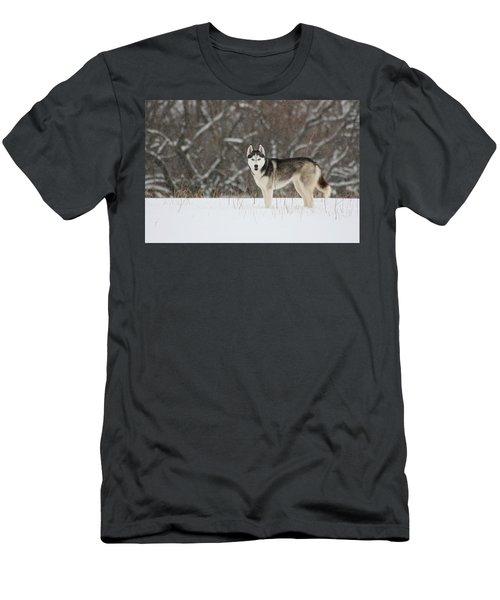 Men's T-Shirt (Slim Fit) featuring the photograph Siberian Husky 20 by David Dunham
