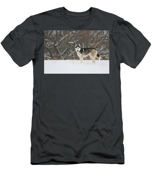 Siberian Husky 20 Men's T-Shirt (Athletic Fit)