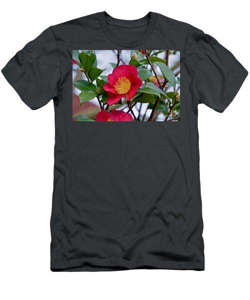 Single Petal Red Camellia Flowers Art Print Men's T-Shirt (Athletic Fit)