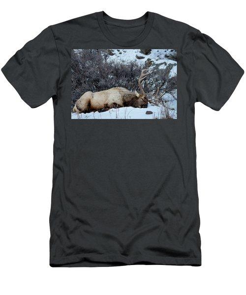 Sleeping Elk Men's T-Shirt (Slim Fit)
