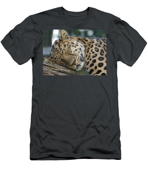 Sleeping Leopard Men's T-Shirt (Athletic Fit)