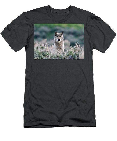 Slough Alpha Men's T-Shirt (Athletic Fit)