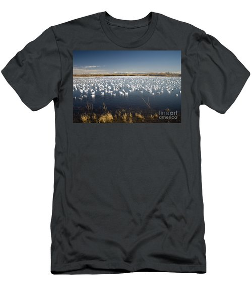 Snow Geese - Bosque Del Apache Men's T-Shirt (Athletic Fit)