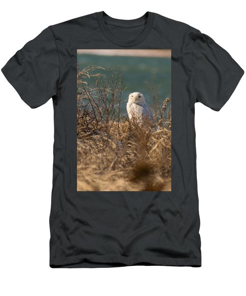 Snowy Owl At The Beach Men's T-Shirt (Athletic Fit)