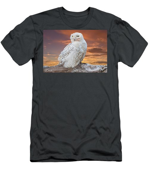 Snowy Owl Perched At Sunset Men's T-Shirt (Athletic Fit)