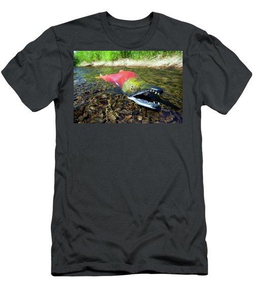 Spawning Sockeye Salmon, Lake Men's T-Shirt (Athletic Fit)
