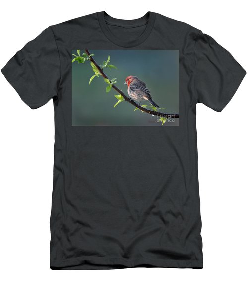 Song Bird In Spring Men's T-Shirt (Slim Fit) by Nava Thompson