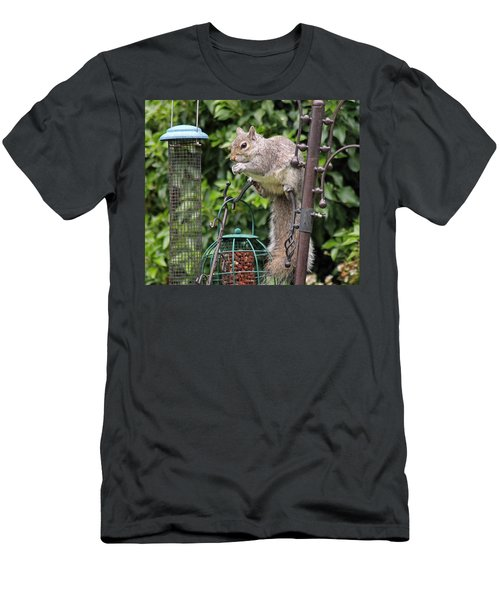 Squirrel Eating Nuts Men's T-Shirt (Athletic Fit)