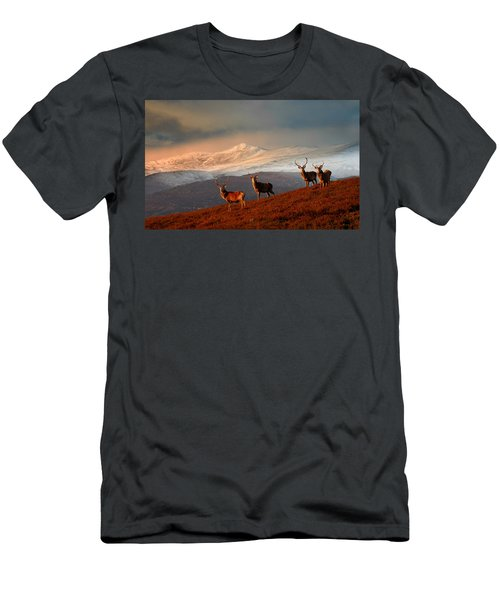 Stags At Strathglass Men's T-Shirt (Athletic Fit)