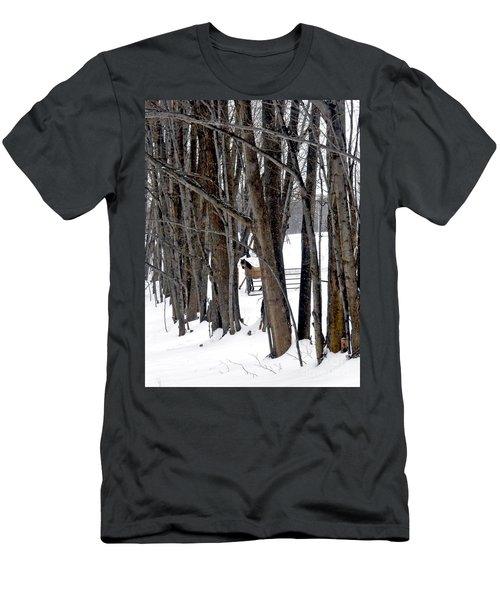 Stallion In The Woods Men's T-Shirt (Athletic Fit)