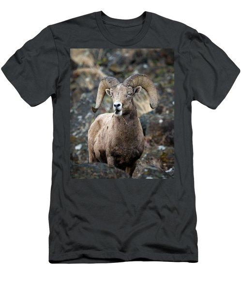 Men's T-Shirt (Slim Fit) featuring the photograph Startled Ram by Steve McKinzie
