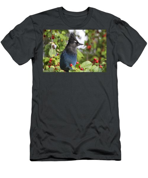 Steller's Jay And Red Berries Men's T-Shirt (Athletic Fit)