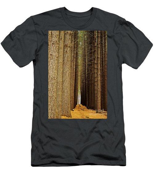 Sugar Pine Walk Men's T-Shirt (Athletic Fit)