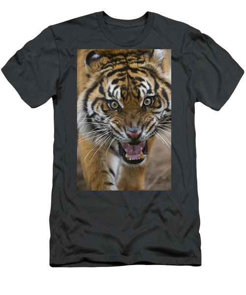 Sumatran Tiger Male Snarling Native Men's T-Shirt (Athletic Fit)