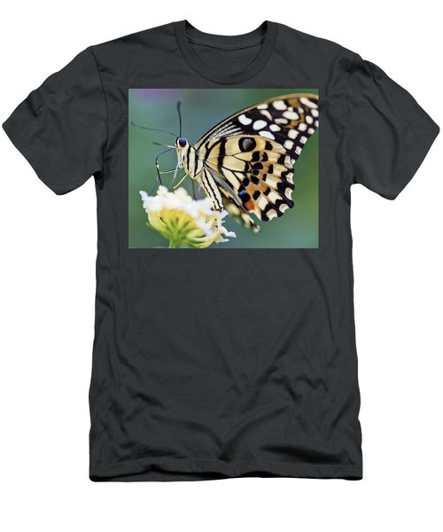 Swallowtail Butterfly Men's T-Shirt (Athletic Fit)