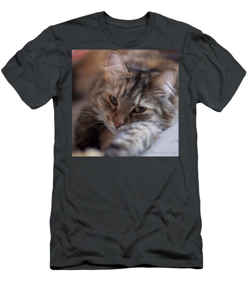 Sweet Ellie, My Daughter's Cat. Canon Men's T-Shirt (Athletic Fit)
