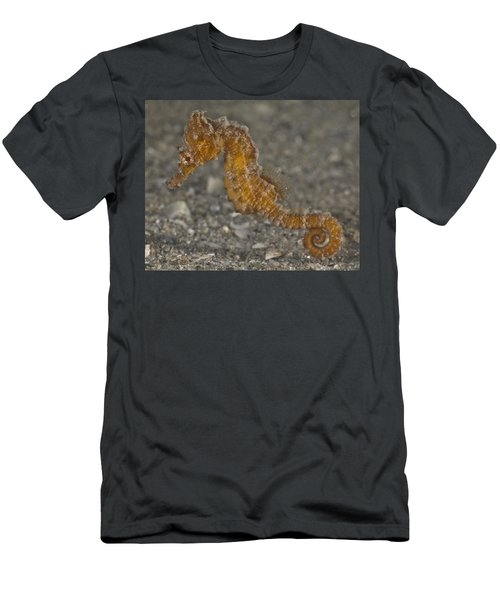 The Baby Seahorse Men's T-Shirt (Athletic Fit)
