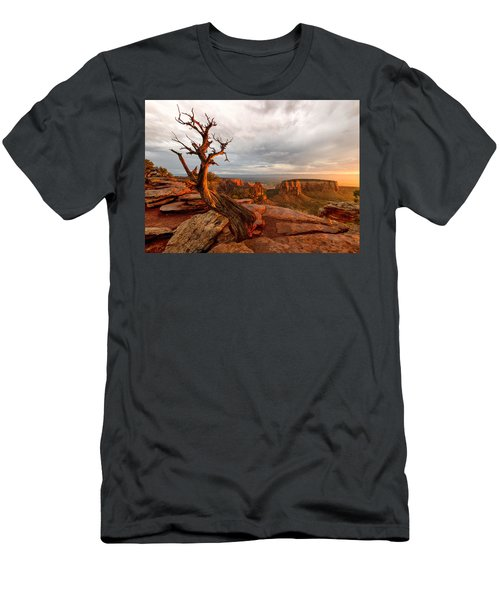 The Light On The Crooked Old Tree Men's T-Shirt (Athletic Fit)