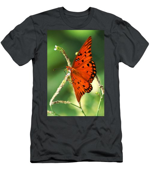 The Passion Butterfly Men's T-Shirt (Athletic Fit)