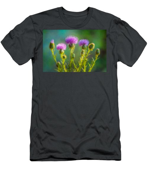 Thistle In The Sun Men's T-Shirt (Athletic Fit)