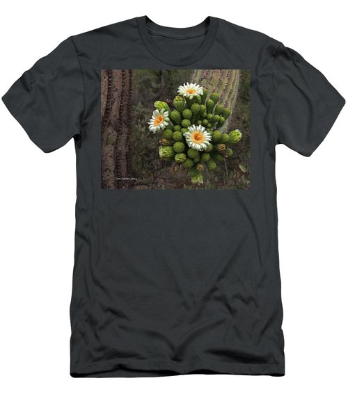 Three Saguaro Blossoms And Many Buds Men's T-Shirt (Athletic Fit)