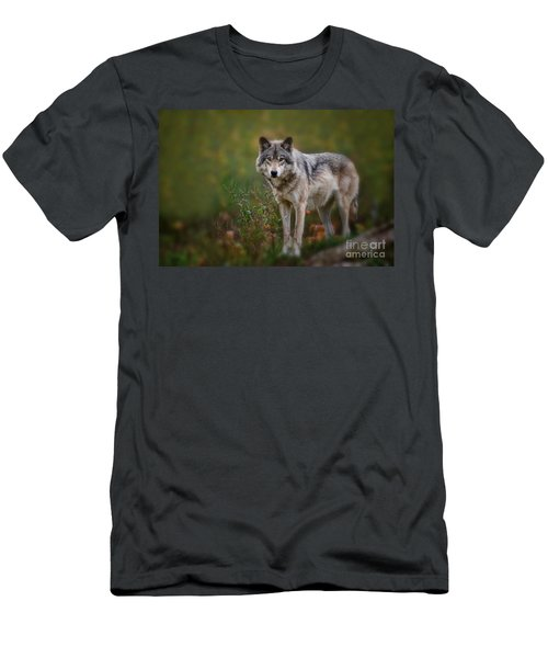 Timber Wolf Pictures 401 Men's T-Shirt (Athletic Fit)