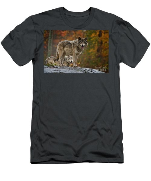 Timber Wolf Pictures 410 Men's T-Shirt (Athletic Fit)
