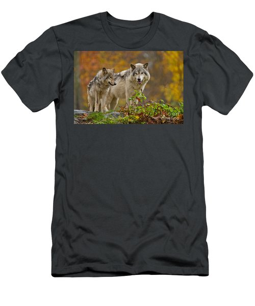 Timber Wolf Pictures 411 Men's T-Shirt (Athletic Fit)