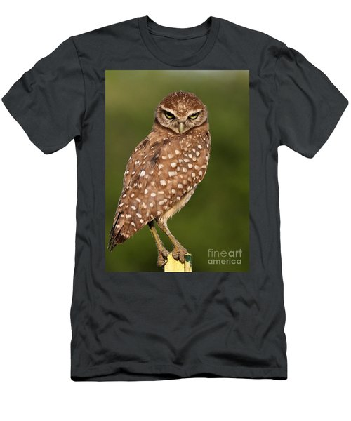 Tiny Burrowing Owl Men's T-Shirt (Athletic Fit)