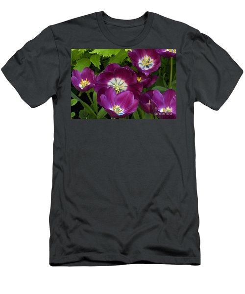 Triumph Tulips Negrita Variety Men's T-Shirt (Athletic Fit)