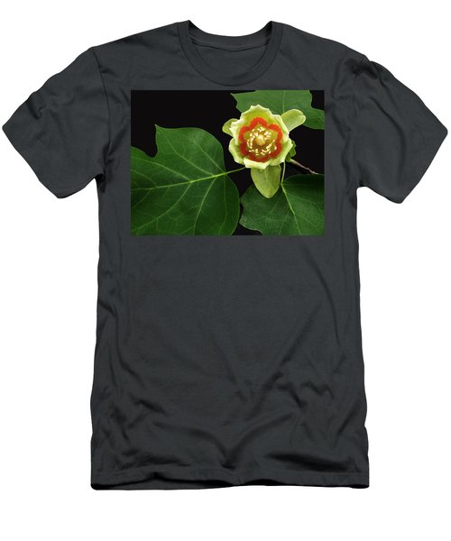 Tulip Bloom Men's T-Shirt (Athletic Fit)