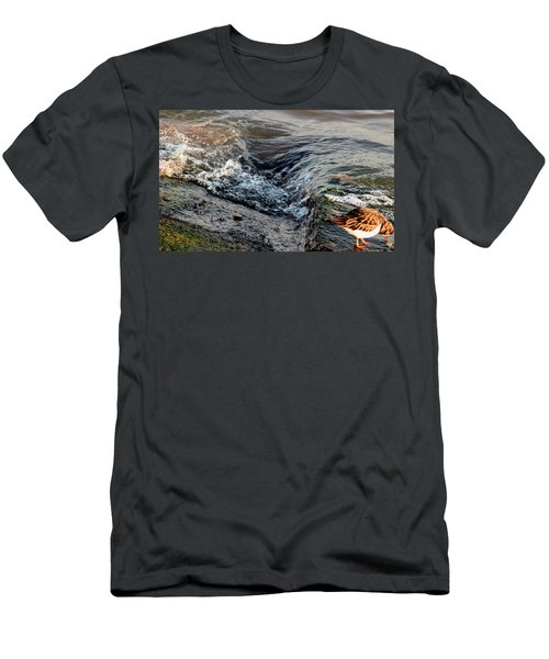 Turnstone By The Water Men's T-Shirt (Athletic Fit)