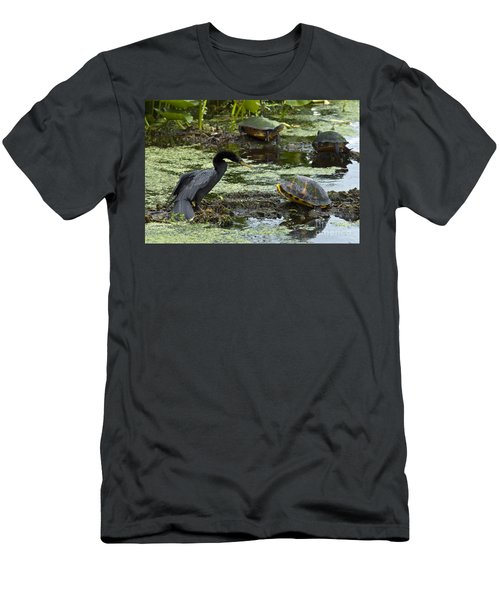 Turtles And Anhinga Men's T-Shirt (Athletic Fit)