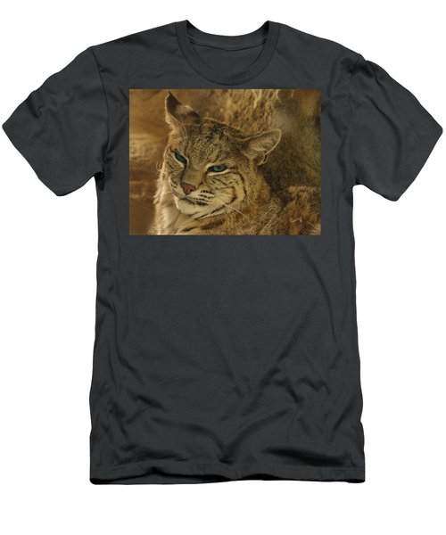 Wary Bobcat Men's T-Shirt (Athletic Fit)