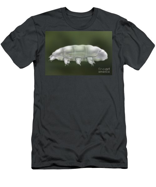 Water Bear Tardigrada - Waterbear Tardigrade  - Scientific Illustration Men's T-Shirt (Athletic Fit)
