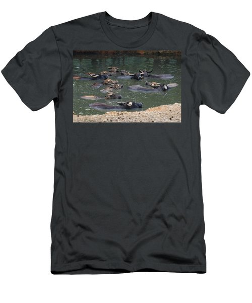 Water Buffalo Men's T-Shirt (Athletic Fit)