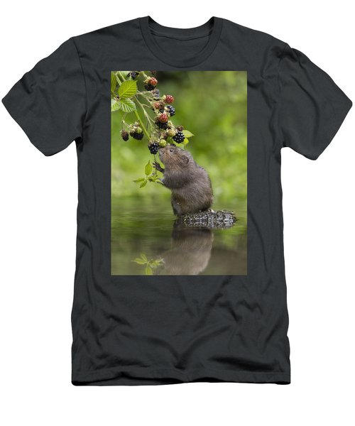Water Vole Eating Blackberries Kent Uk Men's T-Shirt (Athletic Fit)