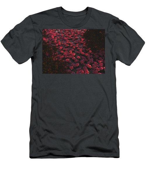 Waterlilies 2 Men's T-Shirt (Athletic Fit)