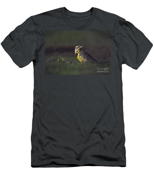 Western Meadowlark Men's T-Shirt (Athletic Fit)