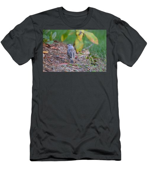 White-crowned Sparrow Men's T-Shirt (Athletic Fit)