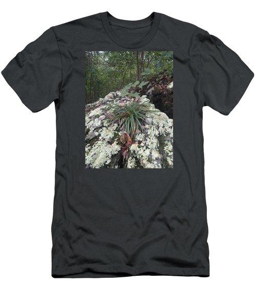 White Lichen Men's T-Shirt (Slim Fit) by Robert Nickologianis