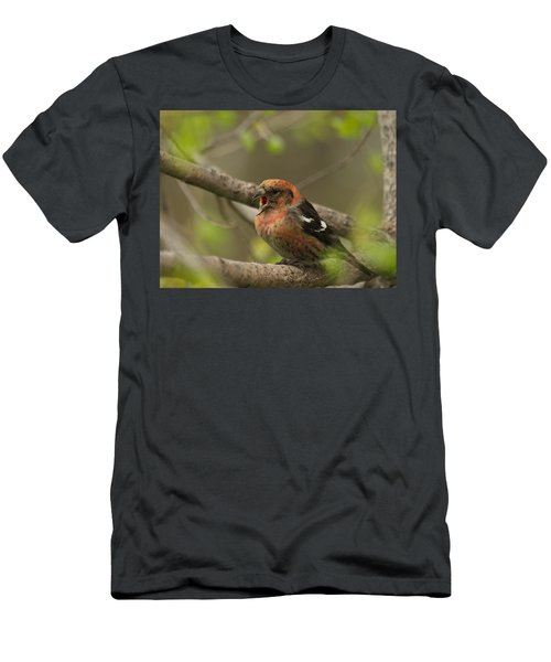 White-winged Crossbill Men's T-Shirt (Athletic Fit)