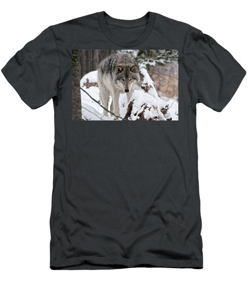 Men's T-Shirt (Slim Fit) featuring the photograph Winter Timber Wolf by Wolves Only