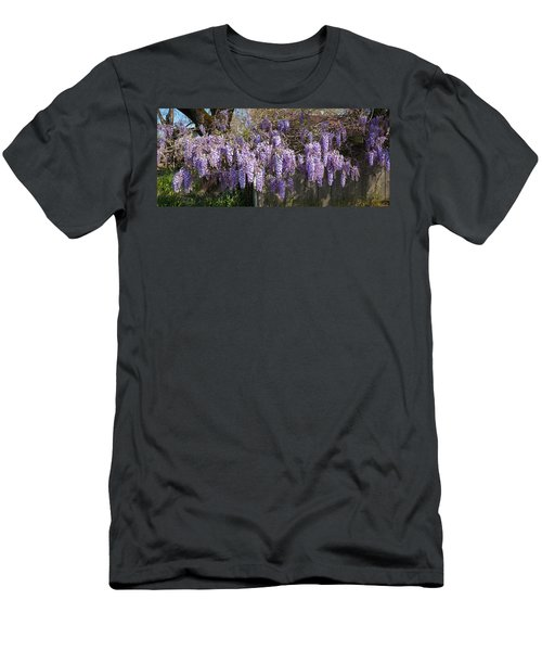 Wisteria Flowers In Bloom, Sonoma Men's T-Shirt (Athletic Fit)