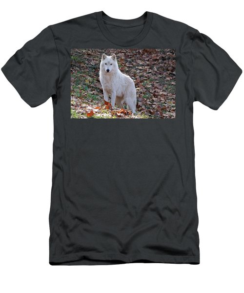Wolf In Autumn Men's T-Shirt (Athletic Fit)
