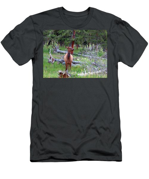 Yellowstone Moments. Doe Men's T-Shirt (Slim Fit) by Ausra Huntington nee Paulauskaite