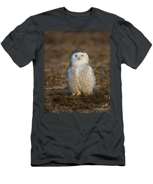 Young Snowy Owl Men's T-Shirt (Athletic Fit)