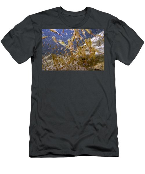 Eastern Fairy Shrimp Easterbrook Forest Men's T-Shirt (Athletic Fit)