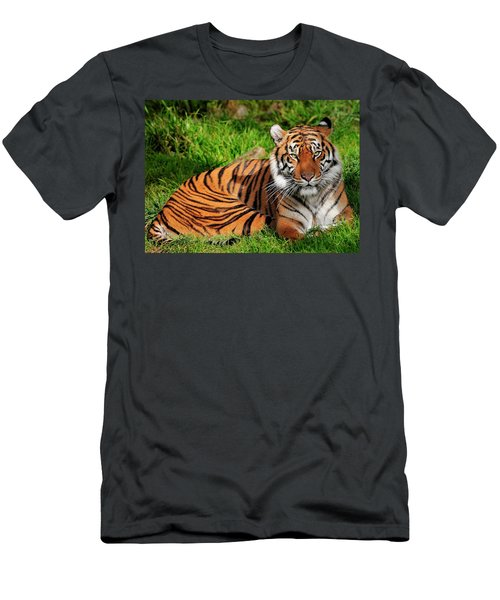 Sumatran Tiger  Men's T-Shirt (Athletic Fit)