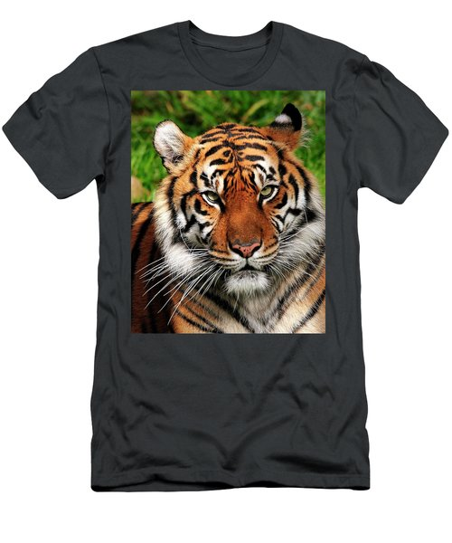 Sumatran Tiger Portrait Men's T-Shirt (Athletic Fit)